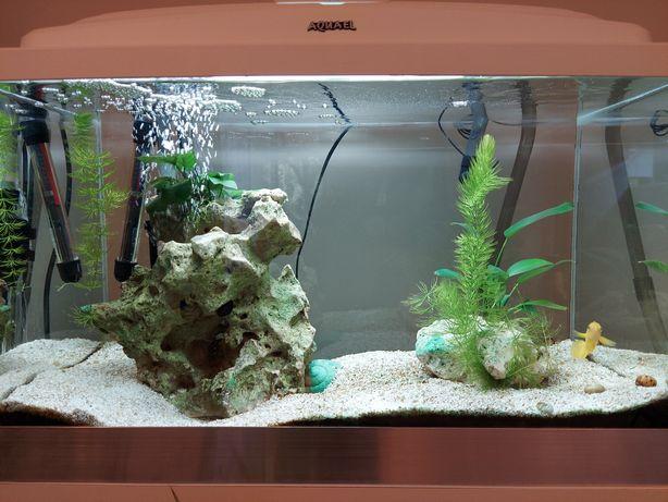 Piękne dojrzałe akwarium OptiWhite mini tanganika 63l 60x30x35 białe