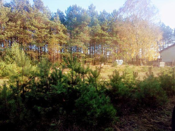 Okolice Brzozówki piękna działka z własnym lasem 1500 m2, jezioro
