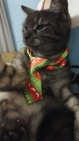 Krawat dla kota lub małego psa zielono-czerwony świąteczny nowy