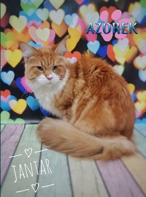 Strzyżenie kotów Fryzjer koci Katowice Chorzów Bytom Fryzjer dla kota