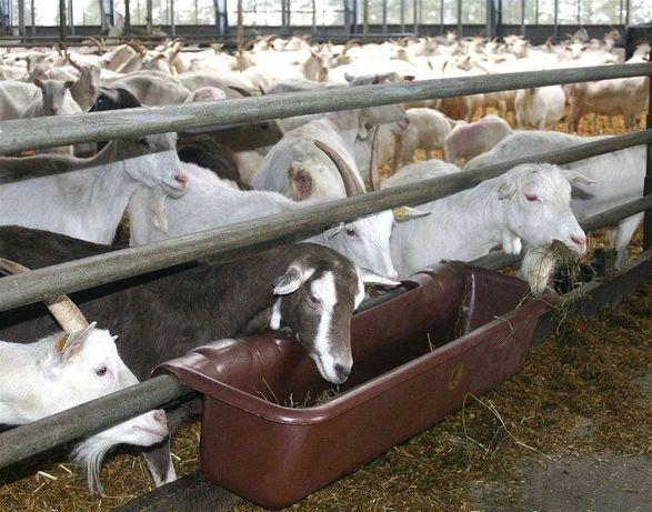 Koryto zawieszane, karmidło dla bydła, kóz, owiec, koni WZMOCNIONE