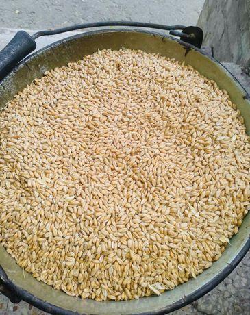 Пшеница, кукуруза, семечки курам