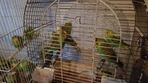 Ptaszki szukają domu.