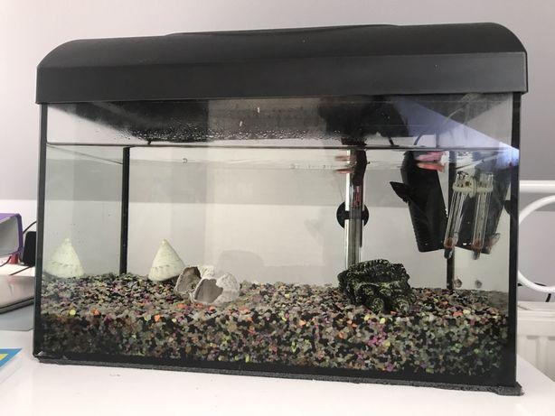 Sprzedam Akwarium Wymiary:40x25x25.