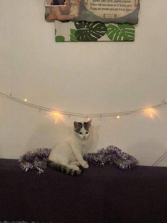 Котенок кот кошка