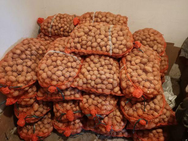 Ziemniaki sadzeniaki