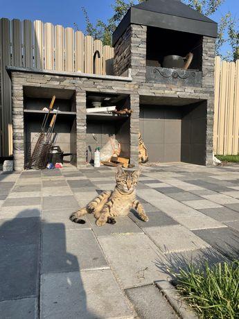 Два котенка ищут дом