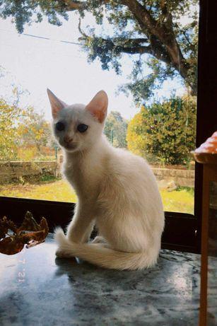 gatinho bebé para adoção Zona Oeste