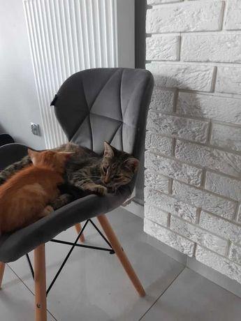 Koteczki szukają kochającego domu