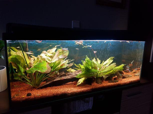 Akwarium 200 L z pokrywą i całym osprzętem