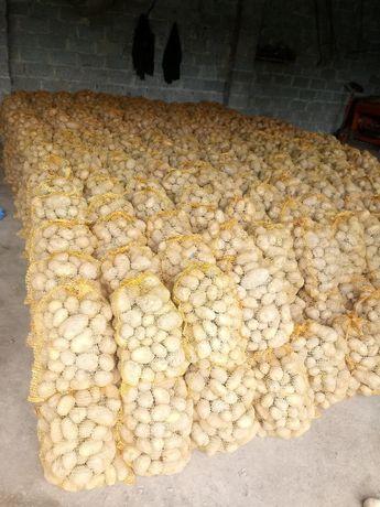 Ziemniaki Owacja
