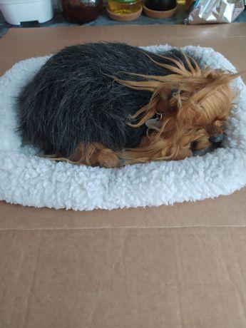 Perfect petzzz cão cadela realista yorkshire terrier para restaurar