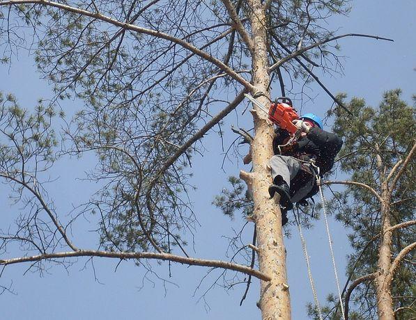 Спил обрезка деревьев, расчитка участка