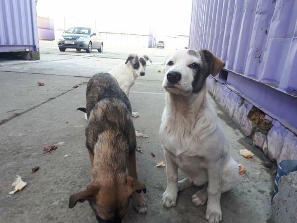 Щенки, собака, кабель