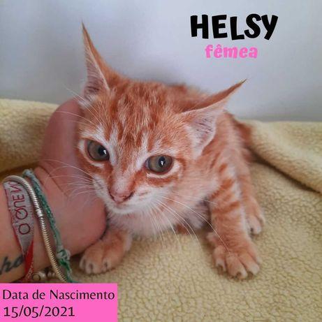 Gatinha 2 meses para adoção (Helsy)