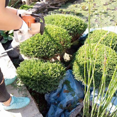 Догляд за рослинами