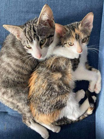 Koci duet szuka wspólnego domu
