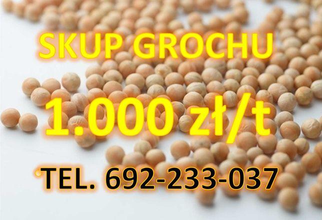 Groch - Skup zbóż czynny 24h/7 - płatność gotówka/przelew