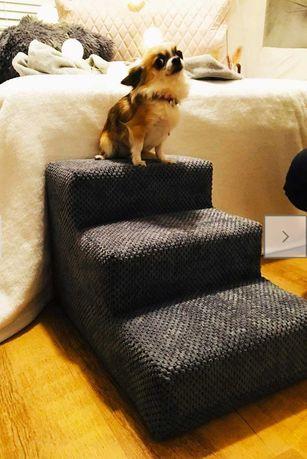 Schodki, schody dla psa.