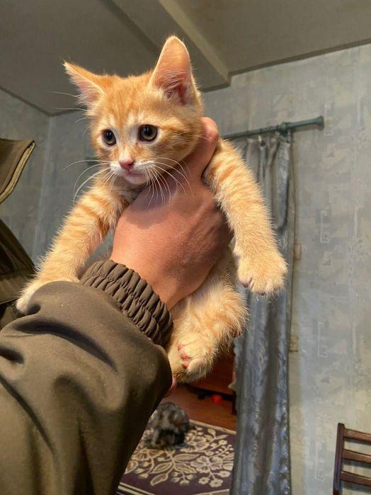 Отдам рыжего котёнка ,мальчик ,2 месяца Харьков - изображение 1