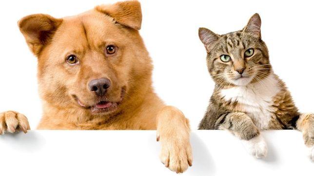 Передержка кошек собак хомяков