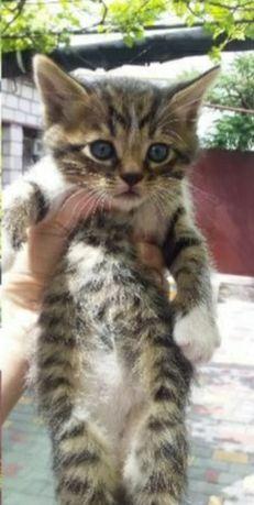 Отдам даром в добрые руки котят