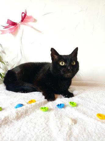 Шикарная черная кошечка