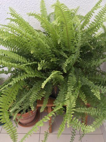 Planta natural com vaso decorativo