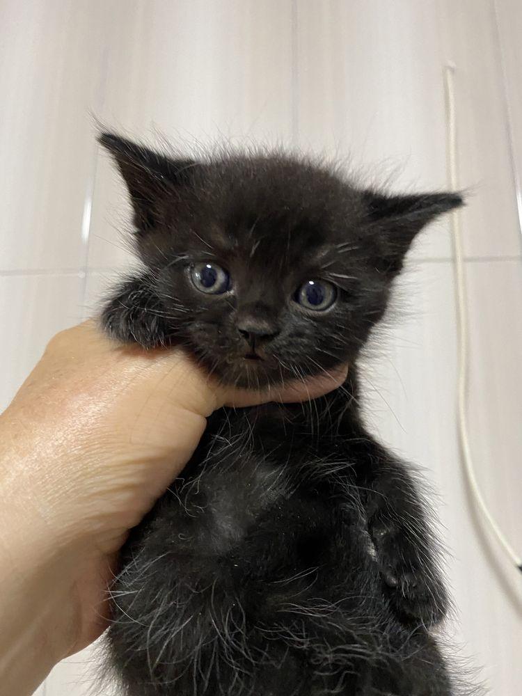 Отдам в хорошие руки миленьких котят! Читайте!