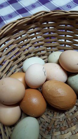 Ovos  galinhas do campo. Patos prontos a cozinhar