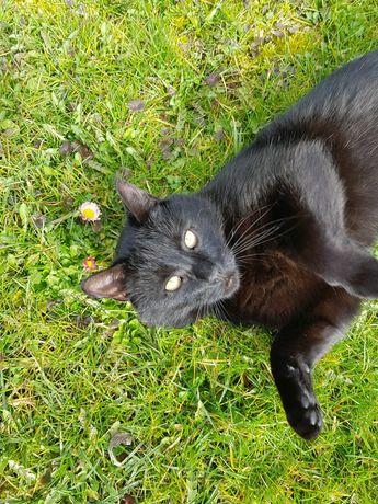 Zaginął czarny kot Jeleniów