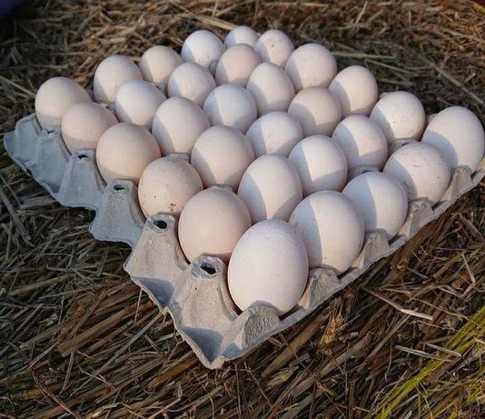 Jajka od kur z wolnego wybiegu
