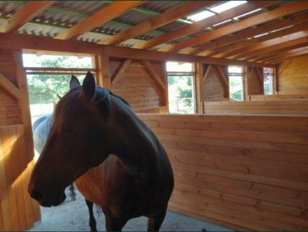 Stajnia dla koni