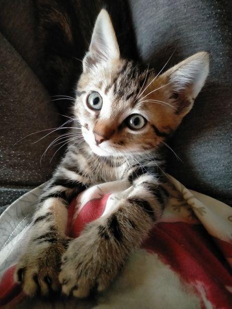 Отдам котенка Бони .