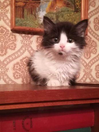 Котята-картинки, 1.5 мес.