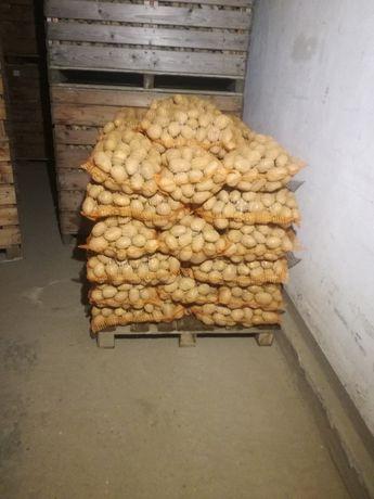 Ziemniaki jadalne MADEIRA śr.40-70mm.