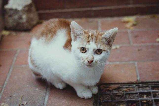 Kotek Eryk szuka domu