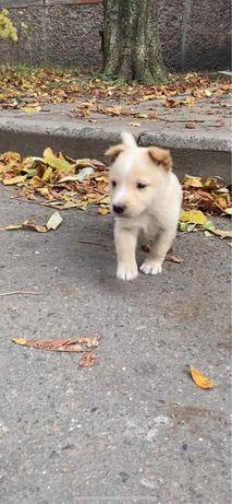 Замечательный щенок ищет дом