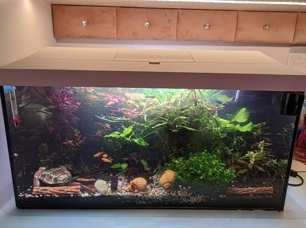 Akwarium Aquael 54l biała pokrywa oświetlenie LED day/night