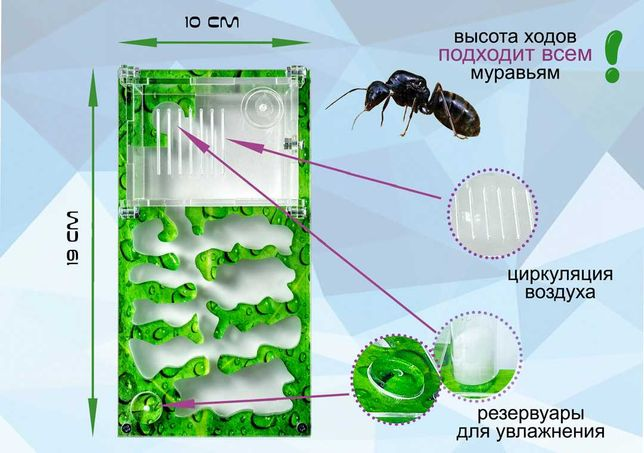 "Муравьиная ферма формикарий Smart ""лист"" для Жнецов Messor Struktor"