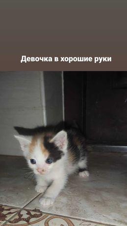 Отдам котят мальчик и девочка