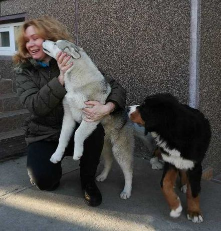 Передержка, выгул, забота и уход за Вашей собакой, Святошино