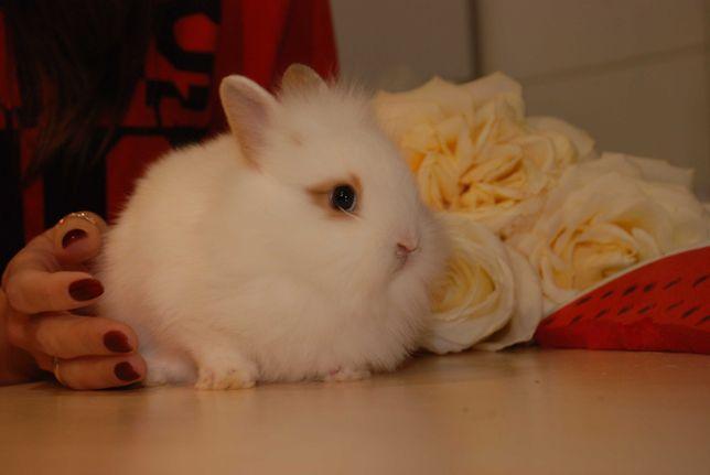 Декоративные кролики для деток