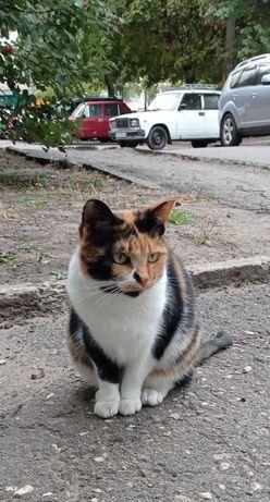 Идеальная кошечка ищет свою семью.