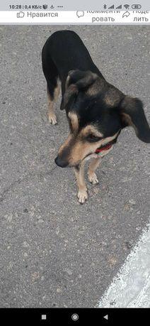 Пропала замечена собака на Моторостроителей