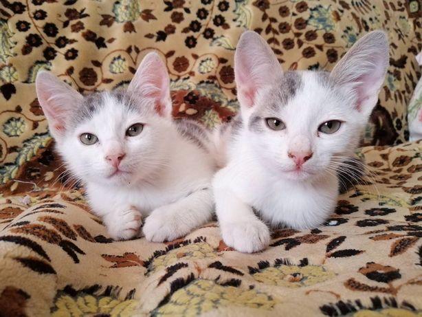 Котята ищут семью! Мальчики