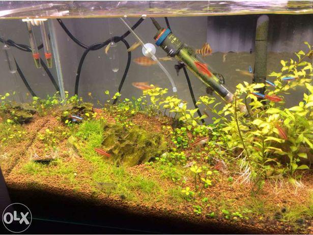 Aquario 50cm