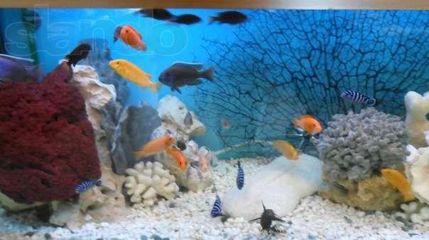 Создам красивый аквариум и Вам