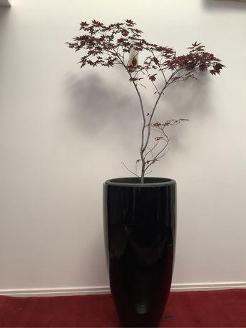 Vasos lacados preto alto brilho 100 x 50cm