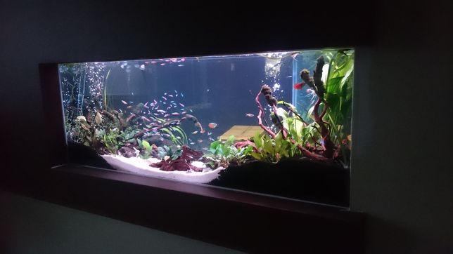 Serwis akwarium, terrarium, zakładanie 24h/7.